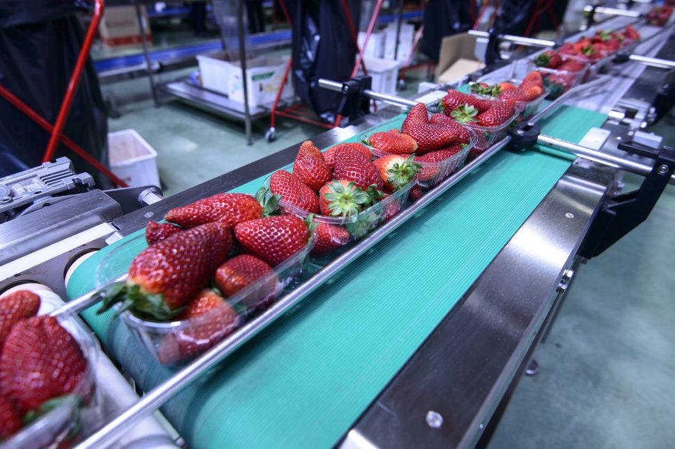 Industrial Food Conveyor Belt
